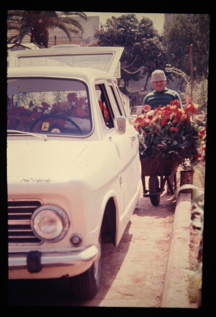 The Shuvs' third Susita, transporting Gerbera plants, 1972. Photo: Yosef Shuv.