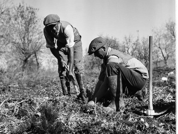נטיעות בשדה יעקב. 1939.