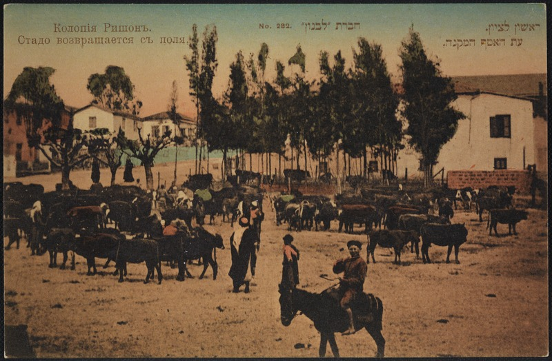 A postcard from the Hebrew settlement of Rishon LeZion, around 1910-1914